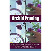 Orchid Pruning: Why You Should Pruning Your Orchid Plant
