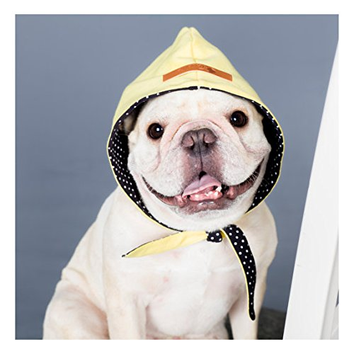 french-bulldog-clothing-reversible-hood-yellow-and-black-white-dots-street-hip-hop-style-for-or-pug-