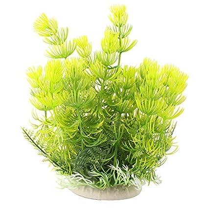Amazon.com : eDealMax cerámica plástico Base de Emulational acuario de la planta acuática hierba decoración DE 8 pulgadas Altura Verde : Pet Supplies