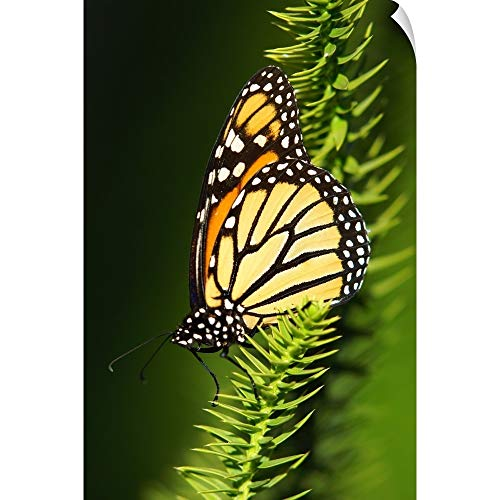 CANVAS ON DEMAND Monarch Butterfly at Marie Selby Botanical Gardens. Wall Peel Art Print, 24