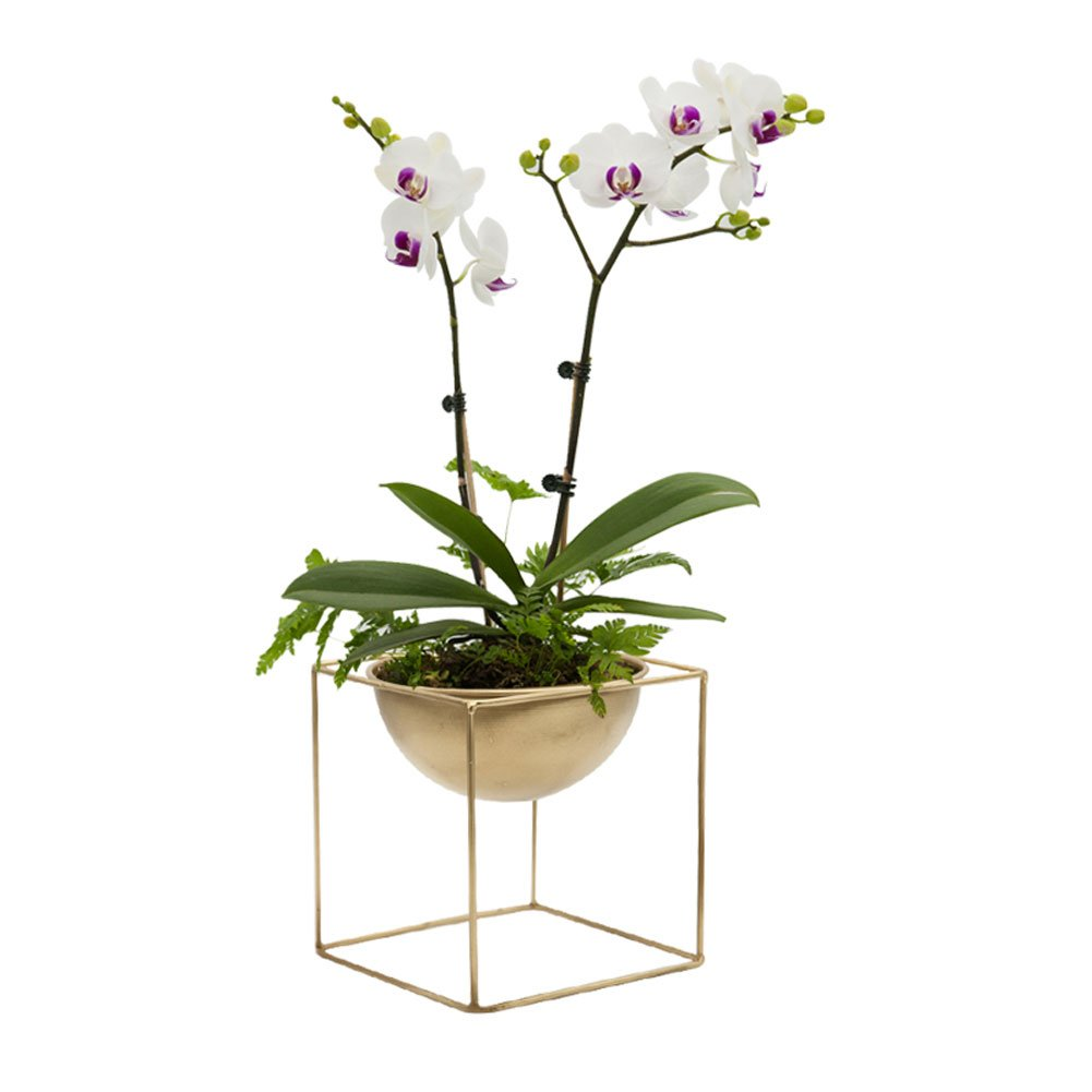 AsureQ 7'' Glod Iron Cube Stand Planter Metal Flower Pot Plant Vase Holder for House Garden Patio Indoor and Outdoor Decorative