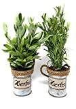 Artificial Silk Plant Flowers Herbs in Galvanized Bucket For Home or Business Small Spaces Set of 2-13'' x 3''