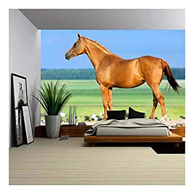 Top Quality Design, Alluring Piece, Chestnut Budenny Horse Looking on The Cows at Field