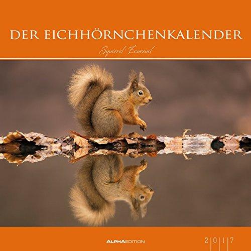 der-eichhrnchenkalender-2017-eichhrnchen-bildkalender-33-x-33-tierkalender