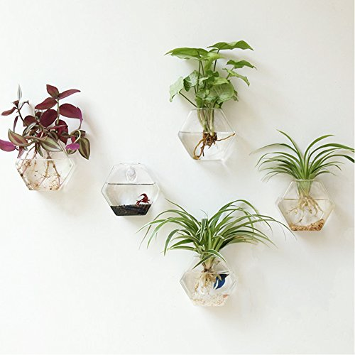 Mkono 2 Pack Wall Hanging Plant Terrarium Glass Planter--Hexagon Shape