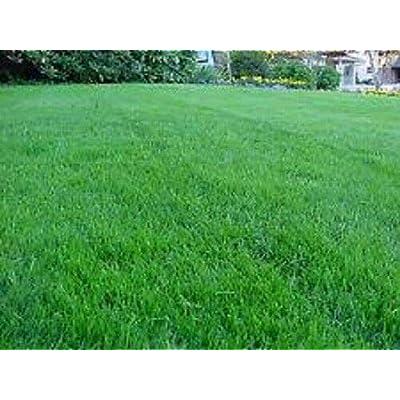 AchmadAnam - Seeds - 10 Lbs Boreal Creeping RED Fescue Grass Shade Tolerant Fine Textured Grass : Garden & Outdoor