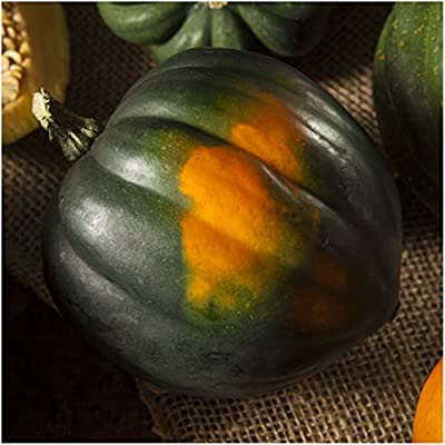 Package of 45 Seeds, Table King Acorn Winter Squash (Cucurbita pepo) Non-GMO Seeds by Seed Needs