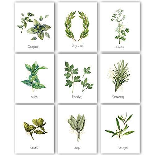 Kitchen Herbs Art Prints Botanical product image