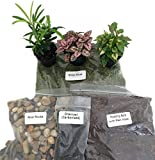 make your own terrarium Terrarium/Fairy Garden Kit with 3 Plants - Create Your Own Living Terrarium