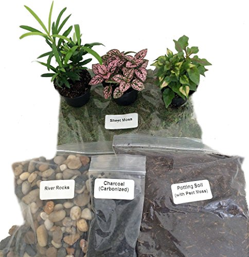 How To Make Terrariums Darby Smart
