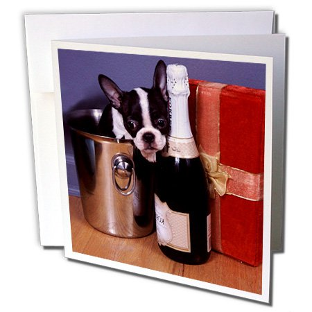 3dRose Boston Terrier Satine - Greeting Cards, 6 x 6 inches, set of 6 (gc_3113_1) - Terrier Birthday Card