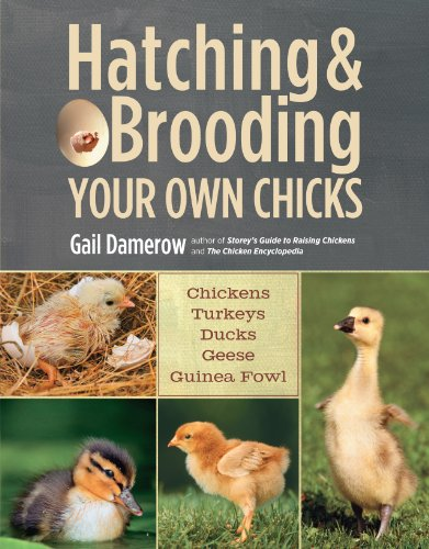 Hatching & Brooding Your Own Chicks: Chickens, Turkeys, Ducks, Geese, Guinea Fowl by [Damerow, Gail]