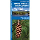 Maine Trees & Wildflowers: A Folding Pocket Guide to Familiar Species (Pocket Naturalist Guide Series)