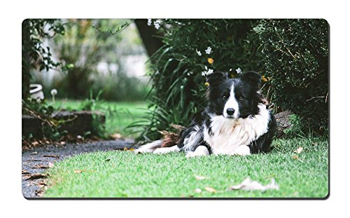 Border Collie Dog Rest Under Tree Animal Picture Game Office Large Mouse Pad (13.5x23.5inches) ()
