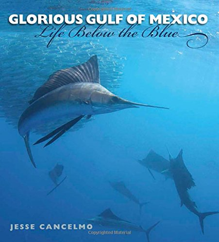 Glorious Gulf Of Mexico  Life Below The Blue  Gulf Coast Books  Sponsored By Texas A M University Corpus Christi