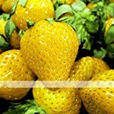 buy (Sweet Yellow *Ambizu*) 200 Seeds / Pack, Sweet Yellow Alpine Strawberry Seed Non-gmo Organic Fruit now, new 2018-2017 bestseller, review and Photo, best price $3.91
