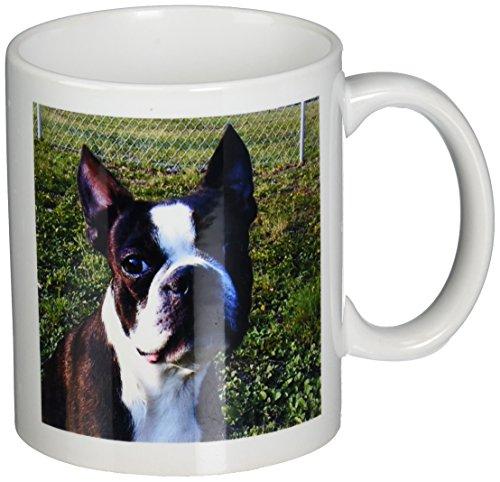 Boston Terrier Portrait (3dRose mug_49296_1 Boston Terrier Portrait Ceramic Mug,)