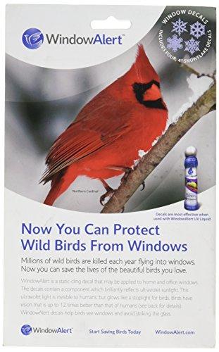 window bird - 7