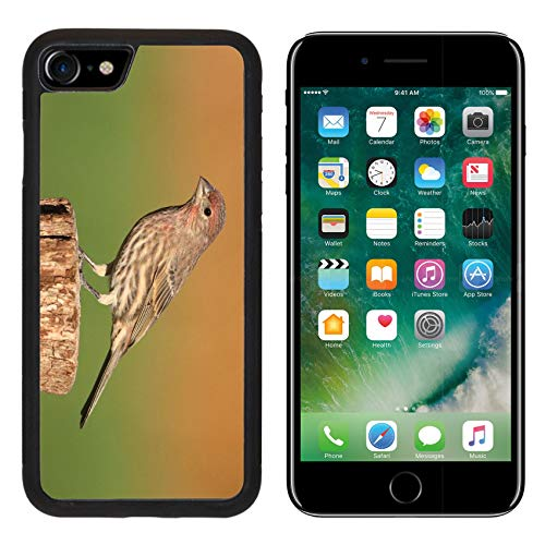 - Luxlady Apple iPhone 8 Case Aluminum Backplate Bumper Snap iPhone8 Cases Image ID: 33250334 Male House Finch Carpodacus mexicanus Perched with a Colorful Background