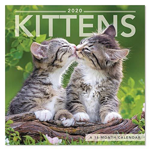 2020 Kittens Wall Calendar, Mini Calendar (DDMN492820)