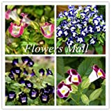 New arrival Torenia fournieri seeds 200pcs Flowers seeds Home&Garden Bonsai Family Diy Plant Courtyard