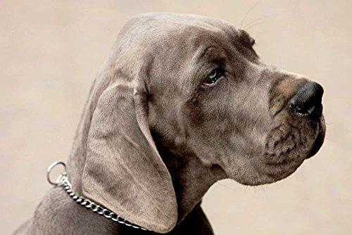 Grey Dog - Art Print Poster,Wall Decor,Home Decor