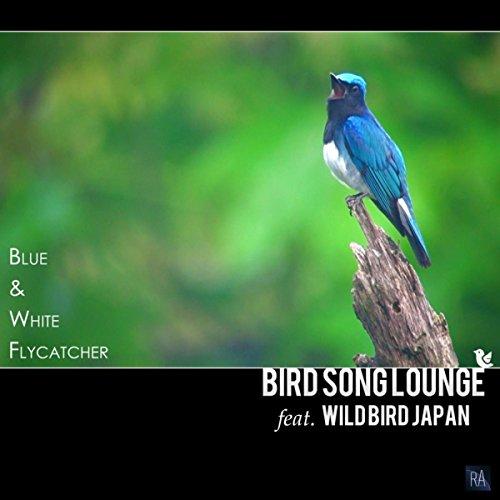 (Blue & White Flycatcher)