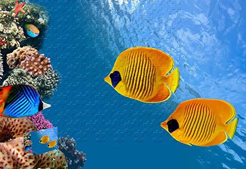 - PigBangbang,34.4 X 22.6 Inch Wooden - Tropical Fish Clown Fish Cocos Island Costa Rica - 1500 Piece Jigsaw Puzzle