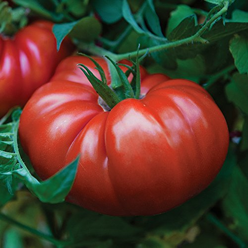 Burpee 69030A Steakhouse Tomato Seeds,