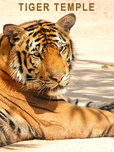 123 Animals - Thailand Tiger Temple