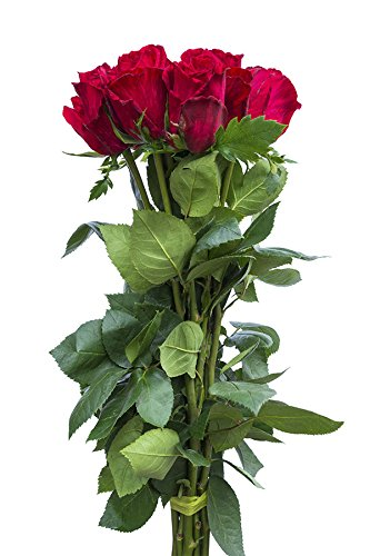 12 Stems - Fresh Cut Red Intuition Rose Bouquet from Flower Explosion (Florist Ri)