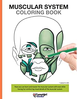 Muscular System Coloring Book Now You Can Learn And Master The With Ease