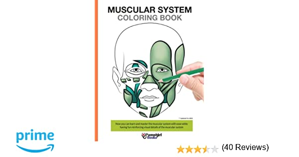 Muscular System Coloring Book Now You Can Learn And Master The With Ease While Having Fun Pamphlet Books 9781505699142 Amazon