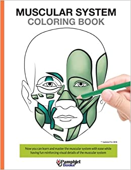 Muscular System Coloring Book: Now you can learn and master the ...
