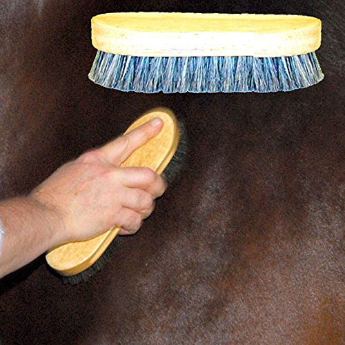 (Intrepid International Pig Bristle Horse Body Brush)