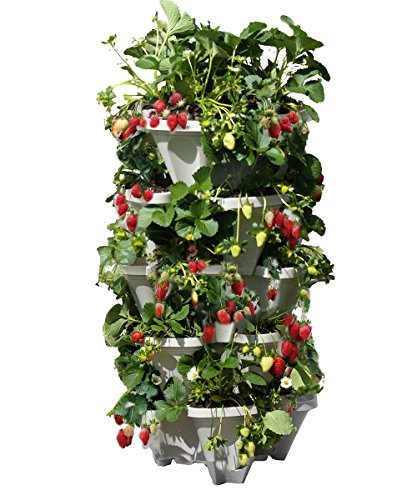 Mr. Stacky 5 Tiered Vertical Gardening Planter, Indoor & Outdoor (Best Things To Grow Hydroponically)