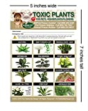 TLC Safety By Design ENHANCED TOXIC PLANTS FLOWERS