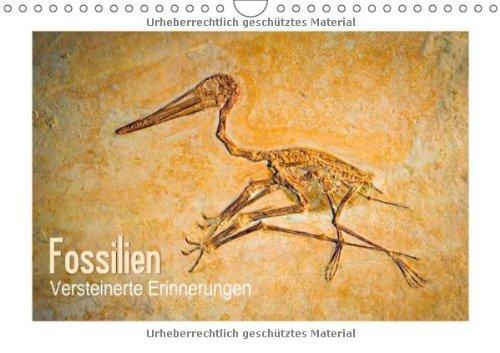 Fossilien – Versteinerte Erinnerungen (Wandkalender 2014 DIN A4 quer): Zeugen der Vergangenheit (Monatskalender, 14 Seiten)