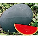 buy Sweet giant Black skin watermelon seeds, seedless watermelon seeds, garden planting, courtyard bonsai fruit - 20 particles/ bag now, new 2018-2017 bestseller, review and Photo, best price $6.94