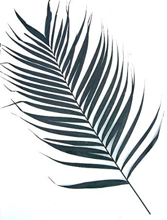 Real Prepared Areka Palm Fronds 110 120 Cm 10 Pieces For Indoor Use