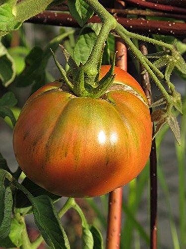 Solanum lycopersicum 20 Samen alte Sorte DunkelroteTomate Schwarze Krim