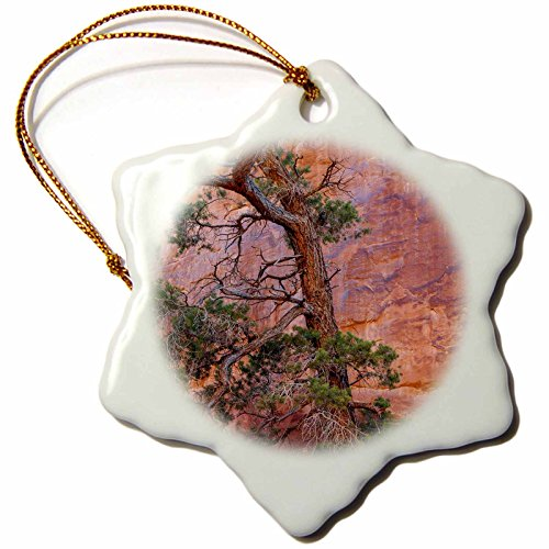3dRose Danita Delimont - Trees - Utah, Arches NP. Pinyon Pine in front of red rock canyon wall - 3 inch Snowflake Porcelain Ornament - Tree Pinyon Christmas