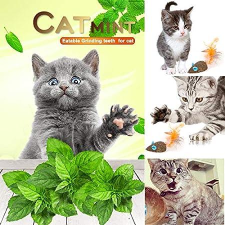 Cleaning Teeth Molar Tools Kitten Cat Chew Toy Natural Catnip Mouse Cat Toy HomTop Cat Catnip Sticks Natural Matatabi Silvervine Sticks