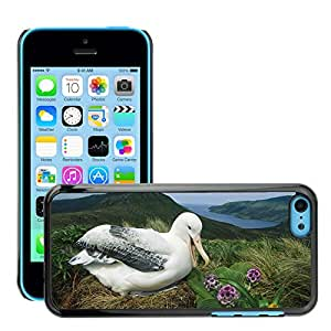 Hot Style Cell Phone PC Hard Case Cover // M00046413 albatross new campbell island zealand // Apple iPhone 5C