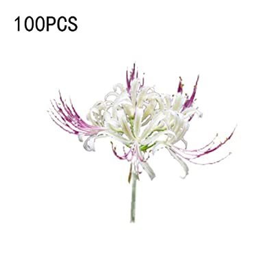 Oliote 100Pcs Lycorisradiata Mandragora Flower Seeds Bonsai Plant DIY Garden Flowers : Garden & Outdoor