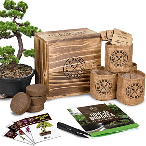 Bonsai Tree Seed Starter Kit - Mini Bonsai Plant Growing Kit, 4 Types of Seeds, Potting Soil, Pots, Pruning Shears Scissor Tool, Plant Markers, Wood Gift Box, eBook, Indoor Garden Gardening Gifts Idea -
