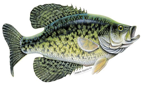 (Crappie Decal/sticker - Freshwater Fish Collection - Small 7 X 4 Facing As Shown)