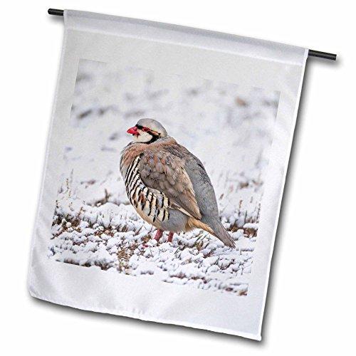 Antelope Stand - 3dRose Danita Delimont - Birds - Utah, Antelope Island State Park, Chukar stands in the snow. - 12 x 18 inch Garden Flag (fl_260205_1)