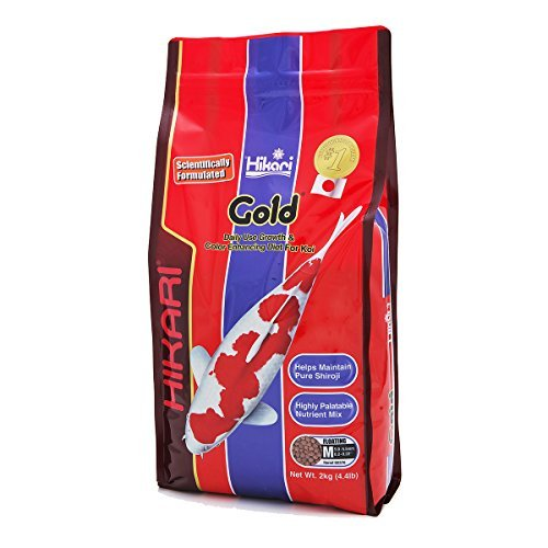 Hikari Usa Inc 02370 Gold 4.4 Lb, Medium by Hikari Usa Inc.