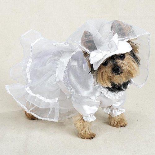 Casual Canine Wedding Dress...